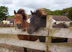 Music-Water-Pets-Corner-Horses-Image