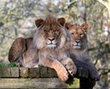 Newquay Zoo Image